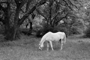 Resim Atlar 4