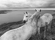 Resim Atlar 1