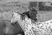 Resim Atlar 3