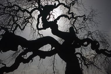 Picture of Tree 3