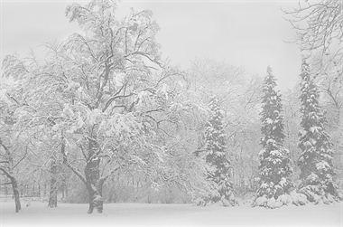 Resim Ağaç 11