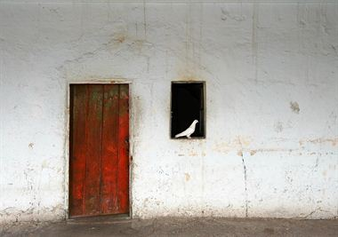 Picture of Red Door and White Pigeon