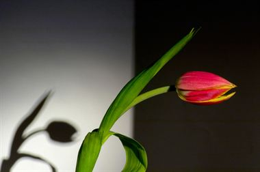 Resim Bitki 01