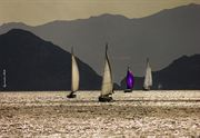 Picture of Sailing Boats 03