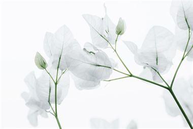 Resim Çiçek 07