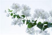 Resim Çiçek 09