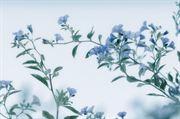 Resim Çiçek 10