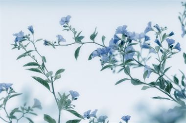 Picture of Flower 10