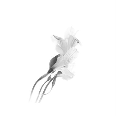 Picture of Flower 18