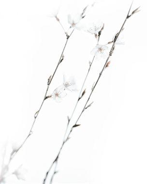 Resim Çiçek 19