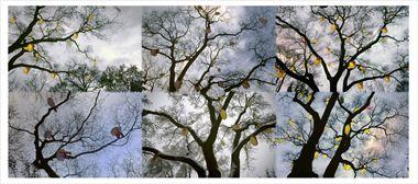 Resim Ağaç 14