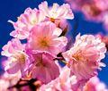 Resim Çiçek 1