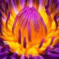 Resim Çiçek 7