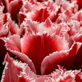 Resim Çiçek 8