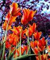 Resim Çiçek 9
