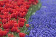 Resim Çiçekler 1