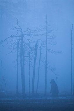 Resim Doğa 16
